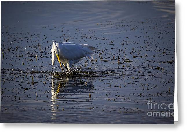 Wading Bird Greeting Cards - I Missed Greeting Card by Marvin Spates