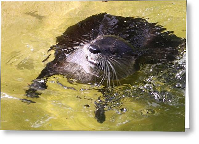 Nice Teeth Greeting Cards - I otter smile Greeting Card by Chuck  Hicks