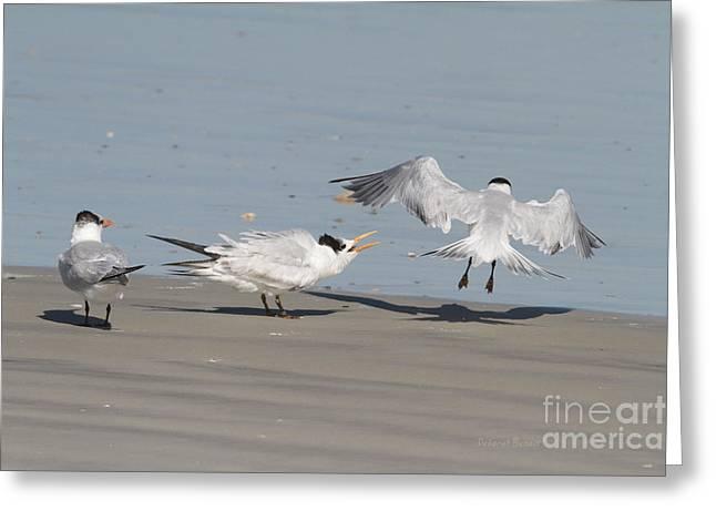 Tern Greeting Cards - I Said leave Greeting Card by Deborah Benoit