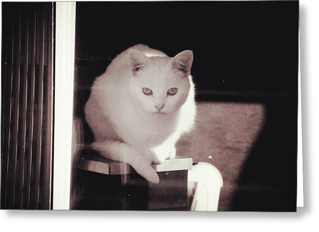 Elegant Cat Picture Greeting Cards - I Saw What Happened Greeting Card by Zinvolle Art