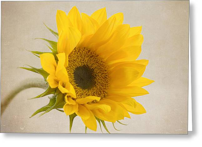 Yellow Sunflower Greeting Cards - I See Sunshine Greeting Card by Kim Hojnacki