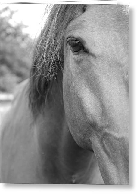 Horseback Photographs Greeting Cards - I See You Greeting Card by Jennifer Lyon