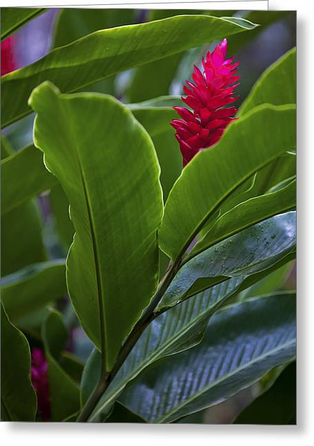 Flora Images Greeting Cards - I see You Greeting Card by Jon Glaser