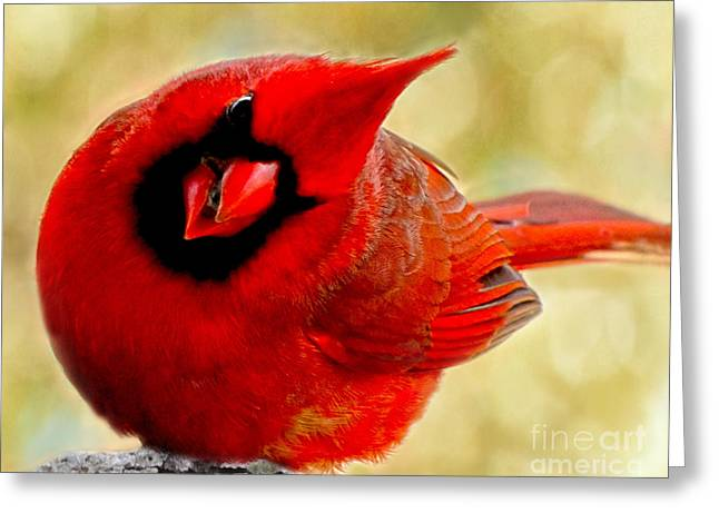 Redfeather Greeting Cards - I see you too Greeting Card by Debbie Portwood