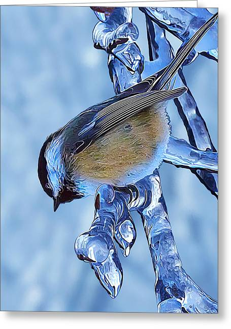 Winter Digital Photo Scene Greeting Cards - I Spy a Chickadee Greeting Card by Bill Caldwell -        ABeautifulSky Photography