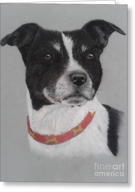 Collie Pastels Greeting Cards - I spy Greeting Card by Leanne Byrom