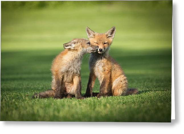 Fox Kit Greeting Cards - I Still Love You Greeting Card by Everet Regal