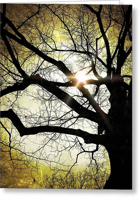Bare Trees Greeting Cards - I think I shall never see a poem as lovely as a tree... Greeting Card by Natasha Marco