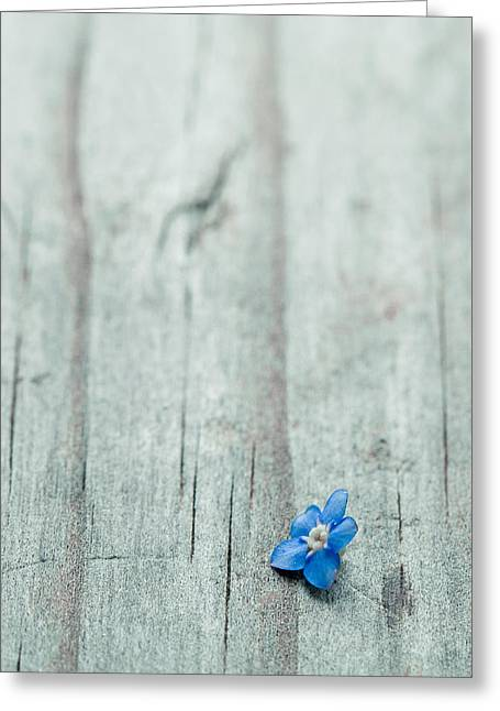 """forget Me Not"" Greeting Cards - I thought youd forgotten me Greeting Card by Constance Fein Harding"