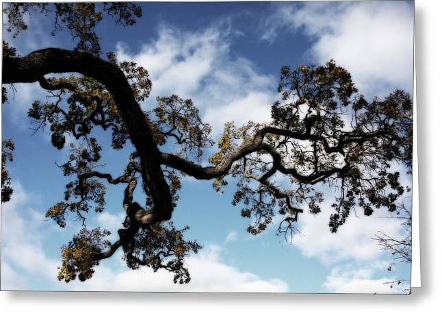 Abstract Nature Greeting Cards - I Touch the Sky Greeting Card by Laurie Search