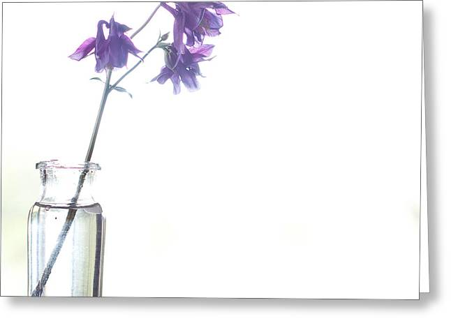 Glass Vase Photographs Greeting Cards - I wait for you Greeting Card by Constance Fein Harding