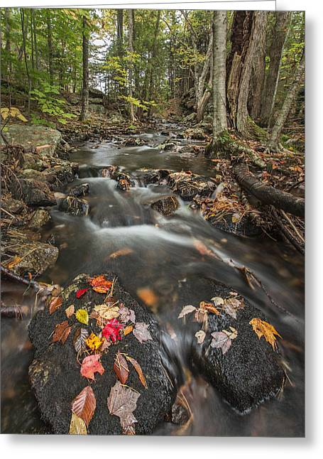 Acadia National Park Photographs Greeting Cards - I Want More Greeting Card by Jon Glaser