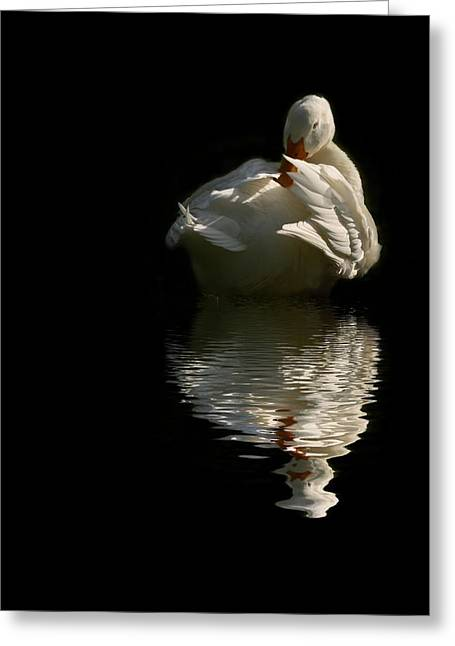 Wildlife Greeting Cards - I want to be a Beautiful Swan Greeting Card by Regina  Williams