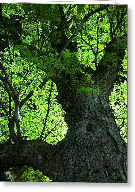 Guy Ricketts Photography And Art Greeting Cards - I Want To Be A Tree Greeting Card by Guy Ricketts