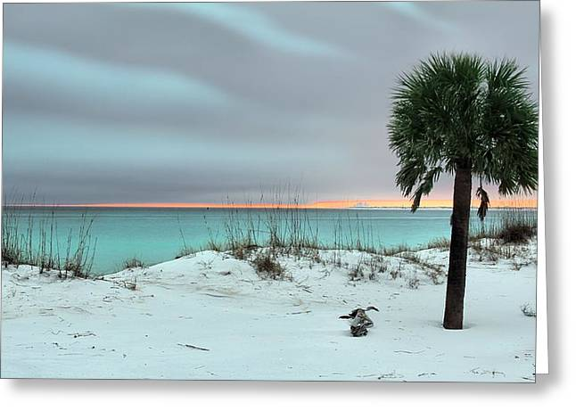 Florida Panhandle Greeting Cards - I Want to be There Greeting Card by JC Findley