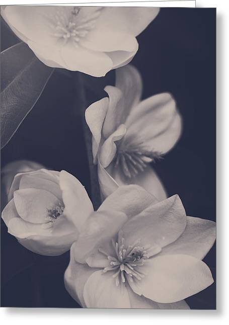 Blooming Trees Greeting Cards - I Was Always Your Flower Greeting Card by Laurie Search