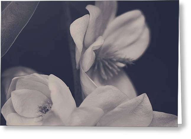 I Was Always Your Flower Greeting Card by Laurie Search