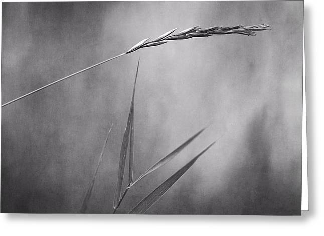 Spikes Greeting Cards - I will hold you in black and white Greeting Card by Priska Wettstein