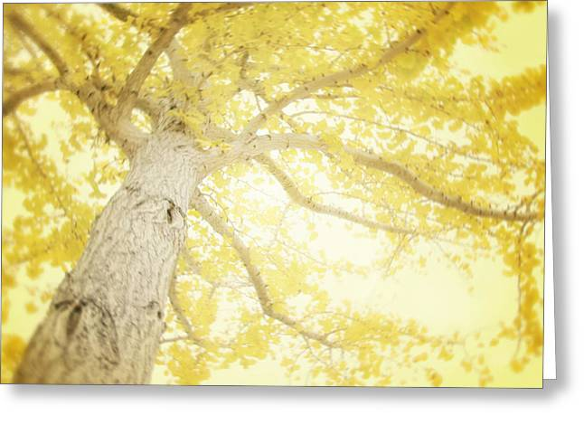 Lemon Art Greeting Cards - I Will Remember You Greeting Card by Amy Tyler