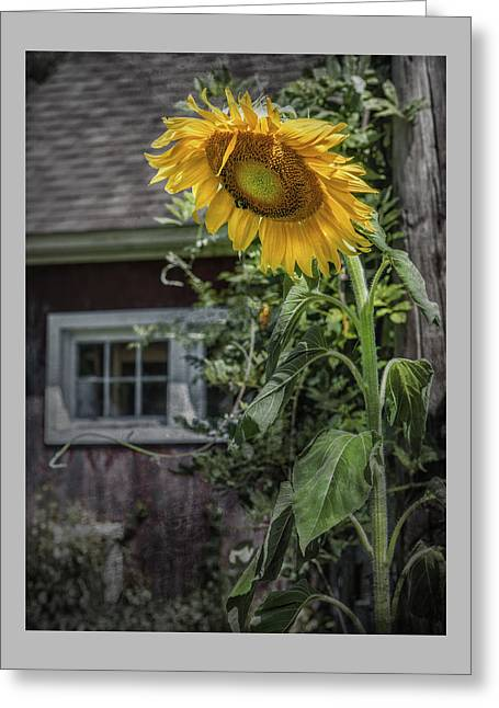 Griswold Connecticut Greeting Cards - Verdent Cottage Garden Greeting Card by Thomas Schoeller