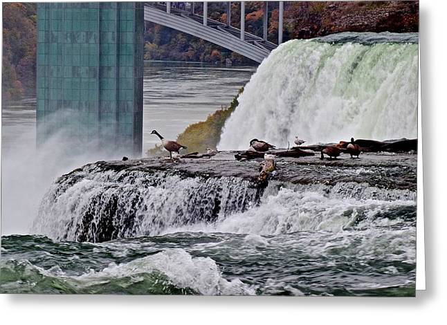 Geese Greeting Cards - I Wonder Whats Down There Greeting Card by Frozen in Time Fine Art Photography
