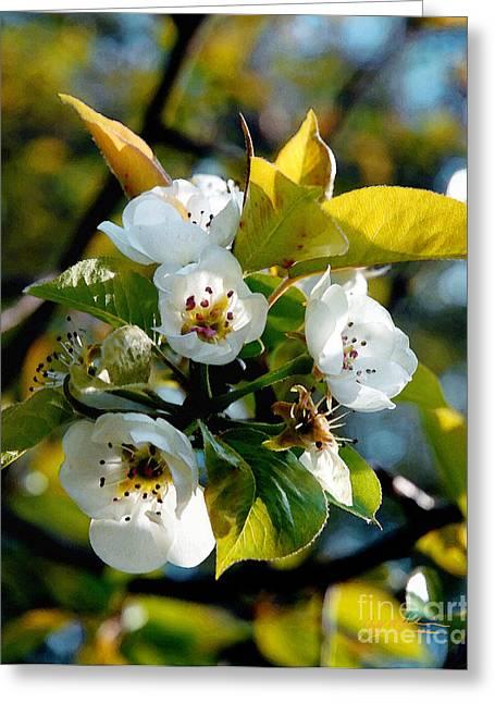 Fractal Orbs Greeting Cards - Ians Plum Blossom I Greeting Card by Jeff McJunkin