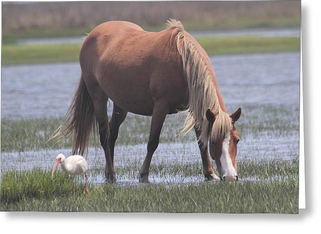 Photographers Conyers Greeting Cards - Ibis and Shackleford Pony 2 Greeting Card by Cathy Lindsey
