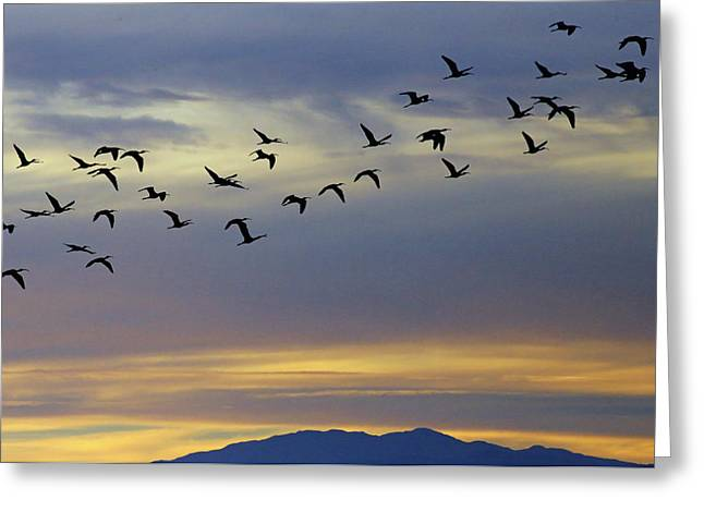 Sonny Bono Greeting Cards - Ibis Blues Greeting Card by Renee Owens