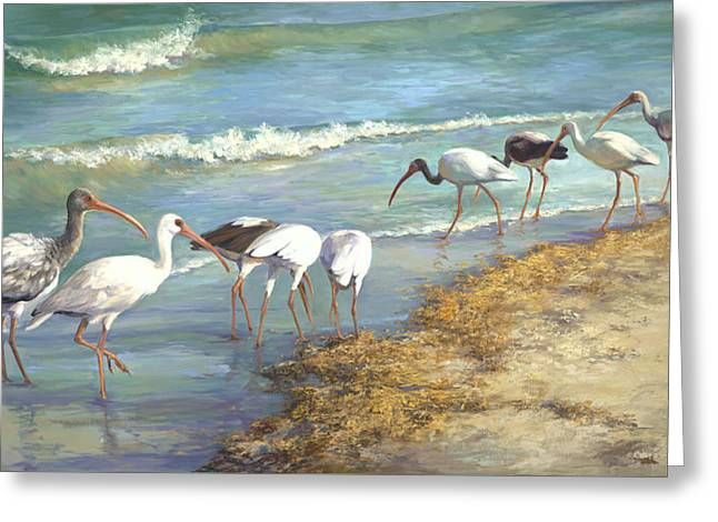 Seaweed Greeting Cards - Ibis on Marco Island Greeting Card by Laurie Hein