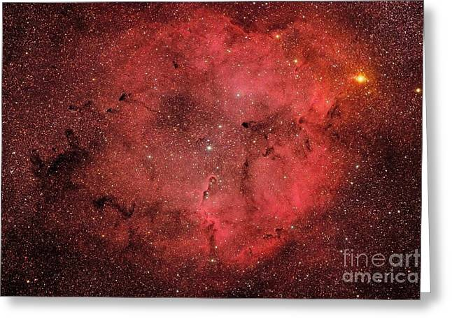 Interstellar Space Greeting Cards - Ic 1396, The Elephant Trunk Nebula Greeting Card by Roberto Colombari