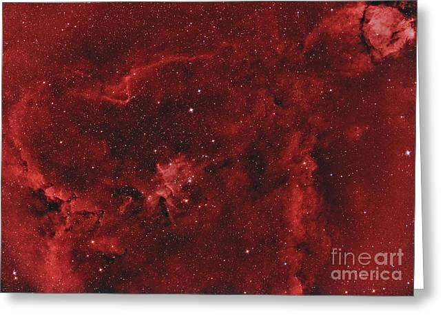 Heart Nebula Greeting Cards - Ic 1805, The Heart Nebula Greeting Card by Reinhold Wittich