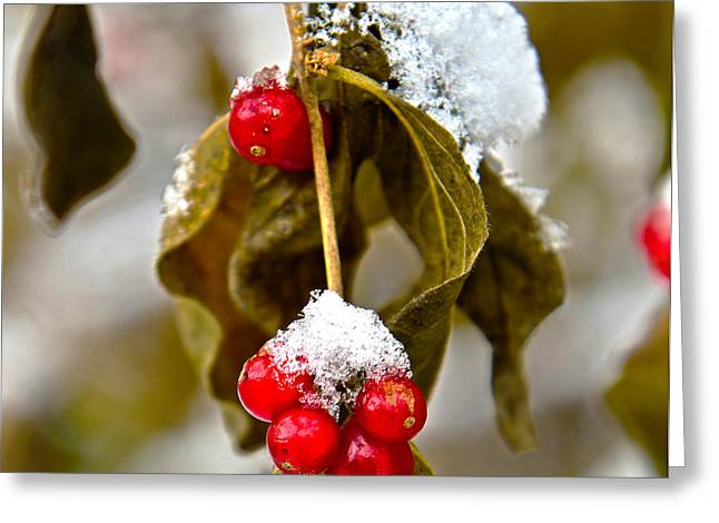 Berry Greeting Cards - Ice and Berries Greeting Card by Jeffrey Hamilton