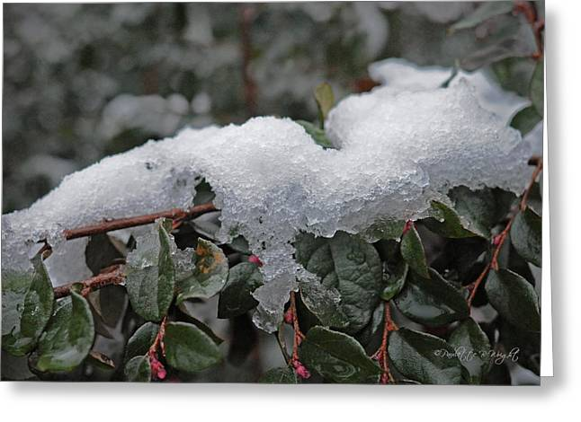 Top Seller Greeting Cards - Ice And Snow Out On A Limb Greeting Card by Paulette B Wright