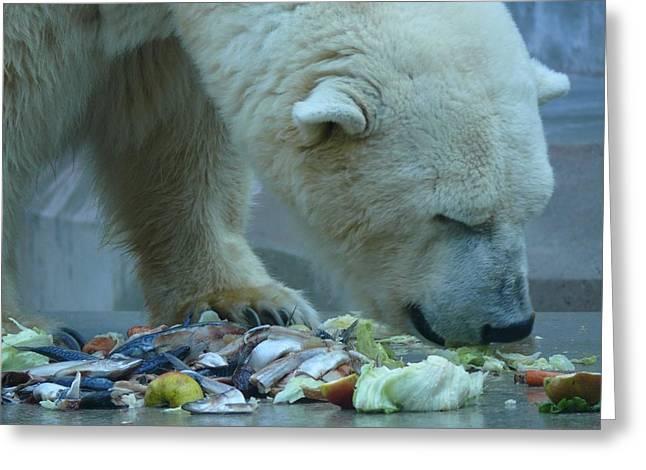 Lone Polar Bear Greeting Cards - Ice Bear Snacking Greeting Card by Hildie Hofmann