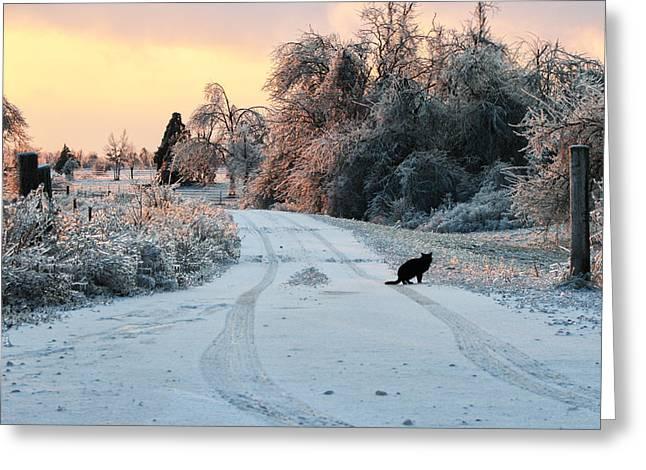 Black Cat Landscape Greeting Cards - Ice Cat Greeting Card by Ryan Burton