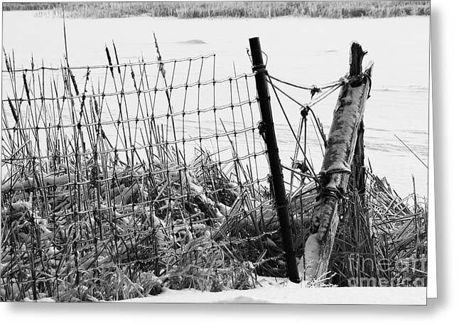 Ice Coated Wire Fence And Rushes After A Winter Storm Greeting Card by Louise Heusinkveld