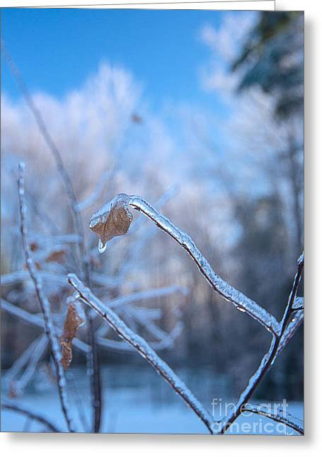 Maine Farms Greeting Cards - Ice Covered Branches Greeting Card by Alana Ranney