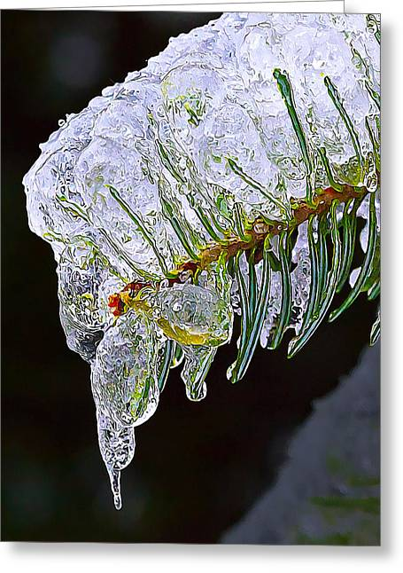 Fir Trees Greeting Cards - Ice Covered Fir Tip Greeting Card by Bill Caldwell -        ABeautifulSky Photography