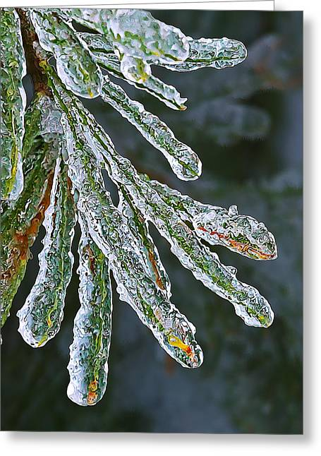 Pine Needles Greeting Cards - Ice Crusted Pine Needles Greeting Card by Bill Caldwell -        ABeautifulSky Photography