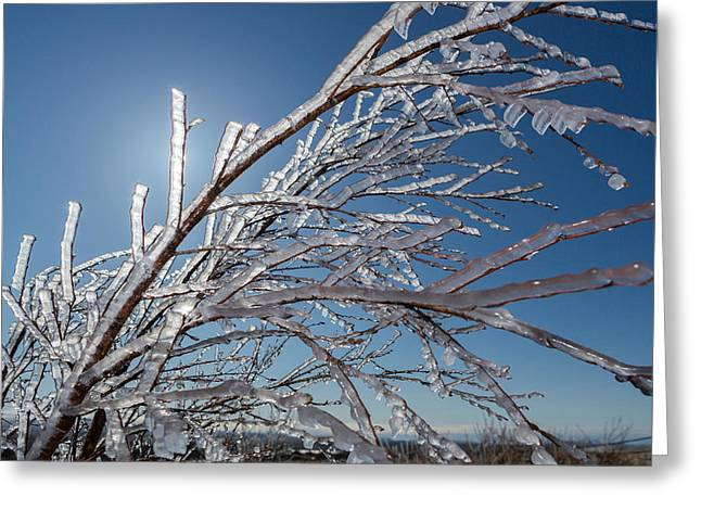 Ice Crystals On Tree Branches, Iceland Greeting Card by Panoramic Images