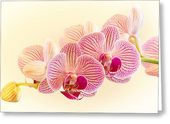 Ice Cube Orchid Greeting Card by Barbara Smith