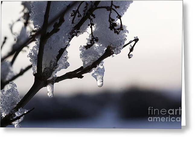 Rural Snow Scenes Greeting Cards - Ice drop Greeting Card by Carol Lynch