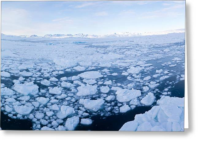 People On Ice Greeting Cards - Ice Floating In Fjord, Tiniteqilaaq Greeting Card by Panoramic Images