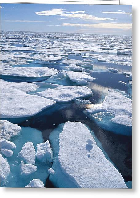 Northwest Territories Greeting Cards - Ice Floes In Arctic Northwest Territories Greeting Card by Konrad Wothe