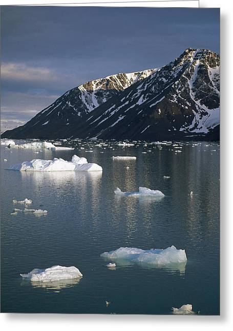 Svalbard Greeting Cards - Ice Floes In Evening Light Spitsbergen Greeting Card by Tui De Roy