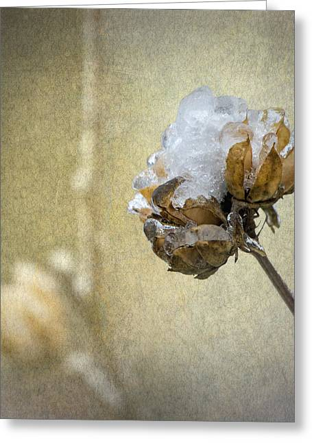Rose Of Sharon Greeting Cards - Ice Flower Greeting Card by Angie Vogel