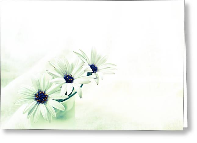 Glass Garden Greeting Cards - Ice flowers Greeting Card by Constance Fein Harding