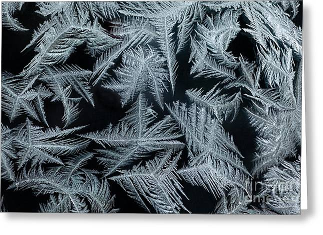 Iceflower Greeting Cards - Ice-flowers Frost Pattern Tracery On Frost Window Greeting Card by Stephan Pietzko