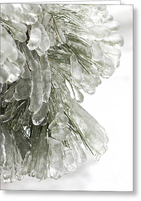 Temperature Greeting Cards - Ice on pine branches Greeting Card by Blink Images