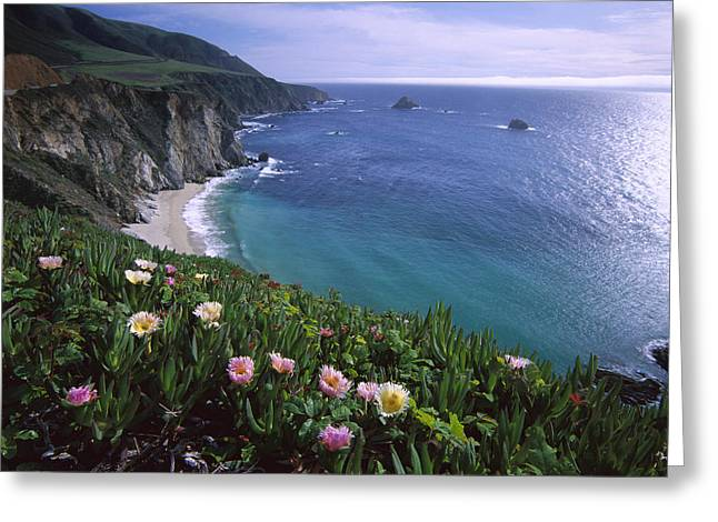 California Beach Greeting Cards - Ice Plants on Big Sur Coast Greeting Card by Tim Fitzharris